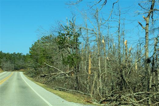 2009 Arkansas Ice Storm Damage, Ozark Mountains