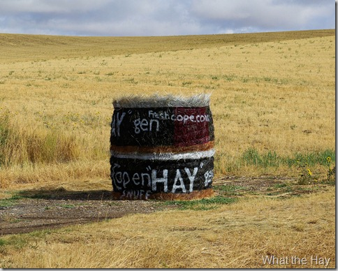What the Hay, Judith Basin County, Montana