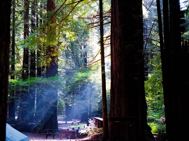 Redwood Forest Campground