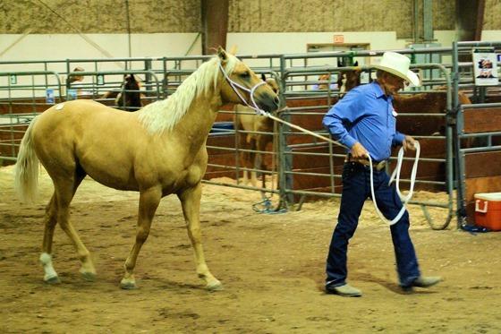 Horse Auction. Great Falls, Montana, September 2, 2007