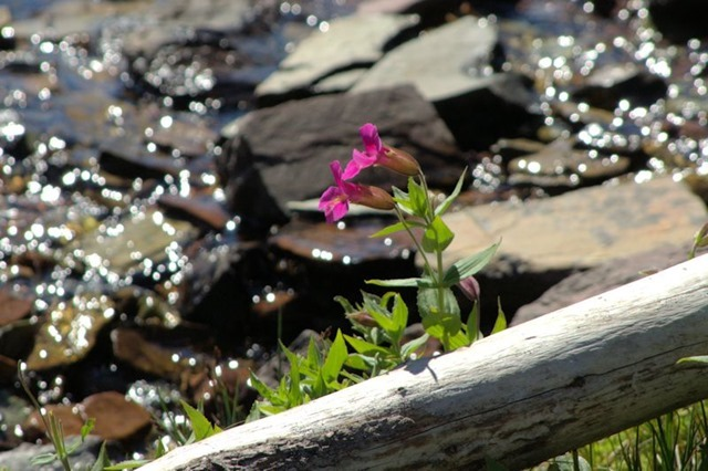 Hanging Gardens Trail to Hidden lake Overlook, Glacier National Park, Montana, August 27, 2014